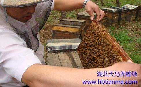 巴西养蜂业