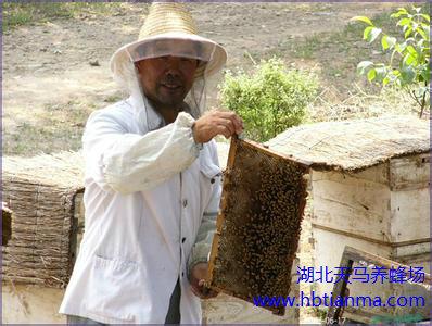 蜂群越冬准备期的管理