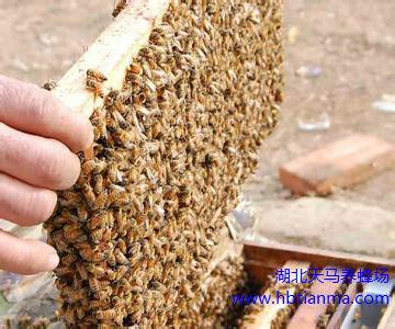 中蜂蜂箱的发展演变历史