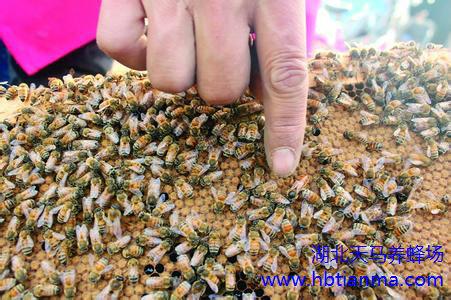 荷花粉面膜怎么做,有哪些作用