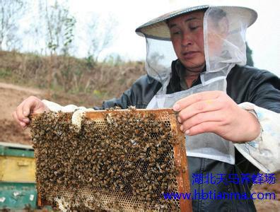 蜜蜂孢子虫病防治