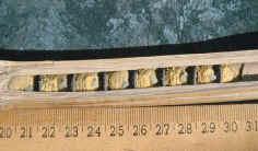 壁蜂(Osmiaspp.)的生物学