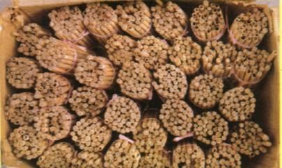 壁蜂的人工饲养与授粉应用技术
