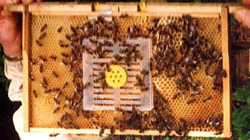 蜜蜂育种工具