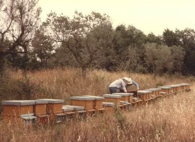走进意大利养蜂场