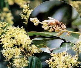 福建蜜粉源植物资源调查研究
