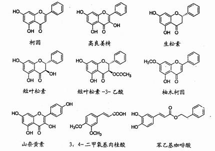 类黄酮的吸收与代谢