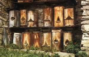西方蜜蜂蜂箱的演变