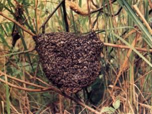 蜜蜂的进化